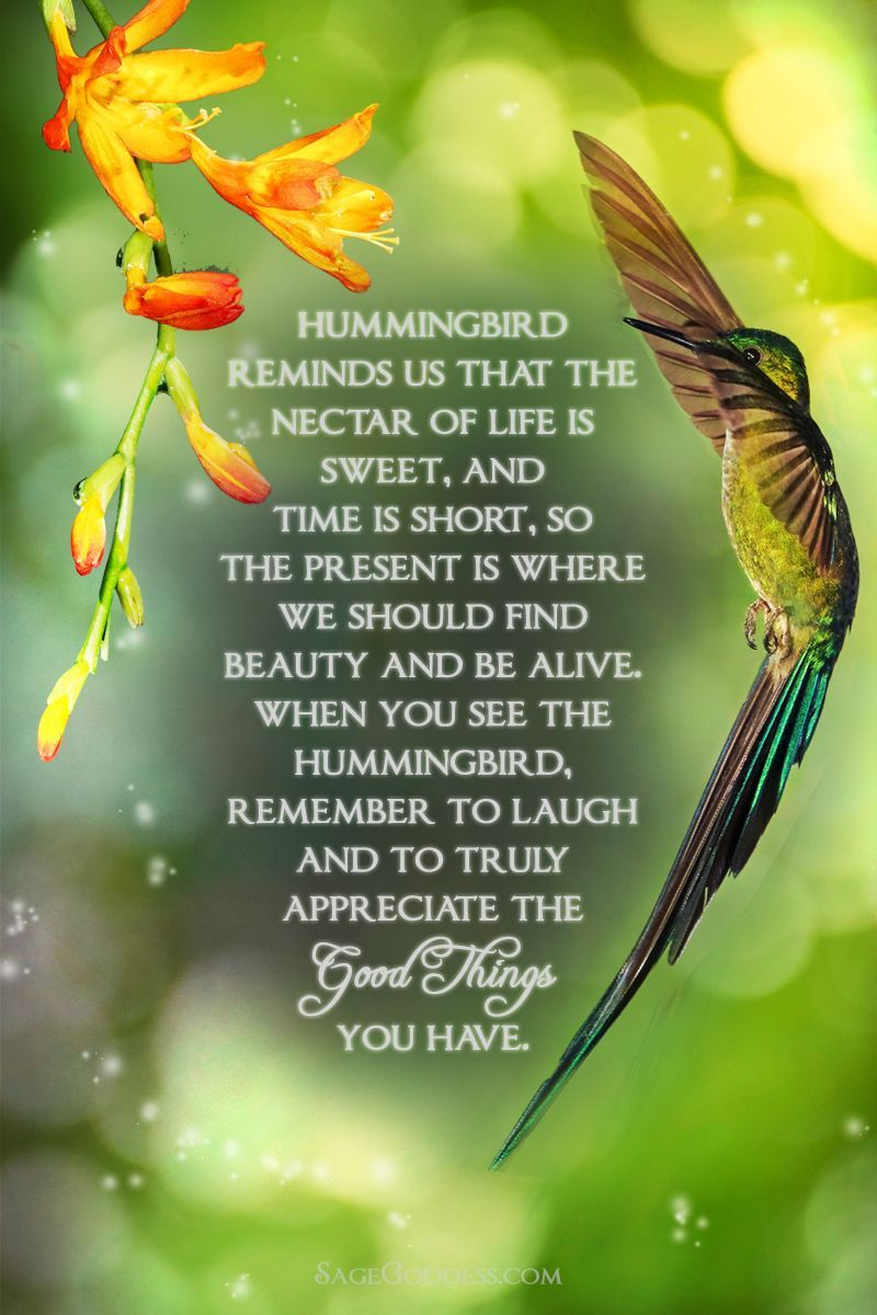 Hummingbird Spirit Animal Perfume for joy, beauty, and