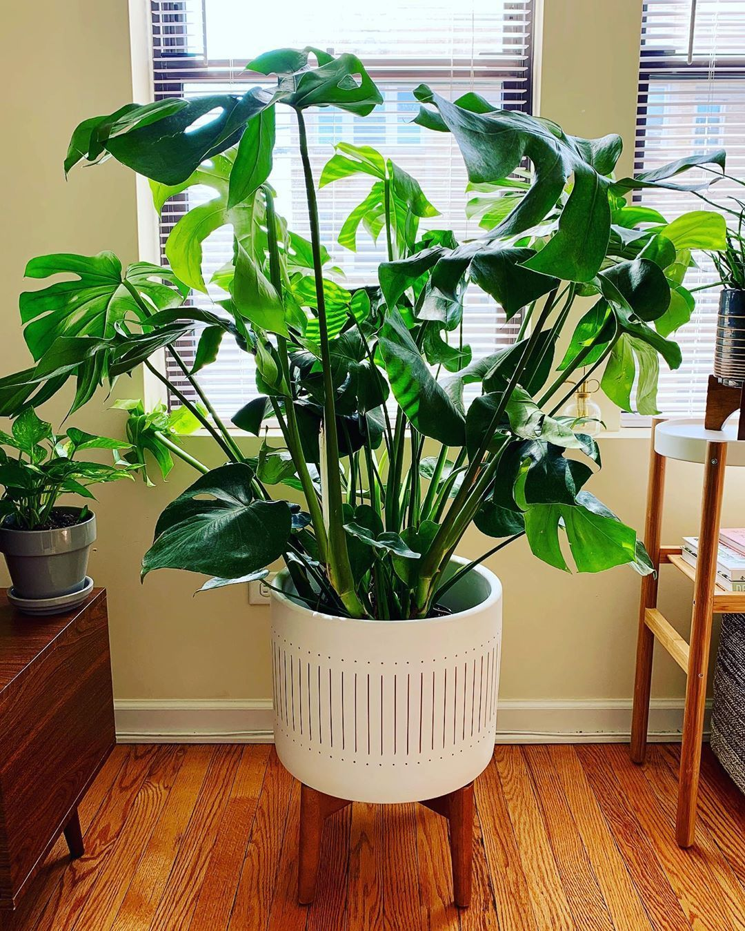 How to care for and propagate your monstera plant in