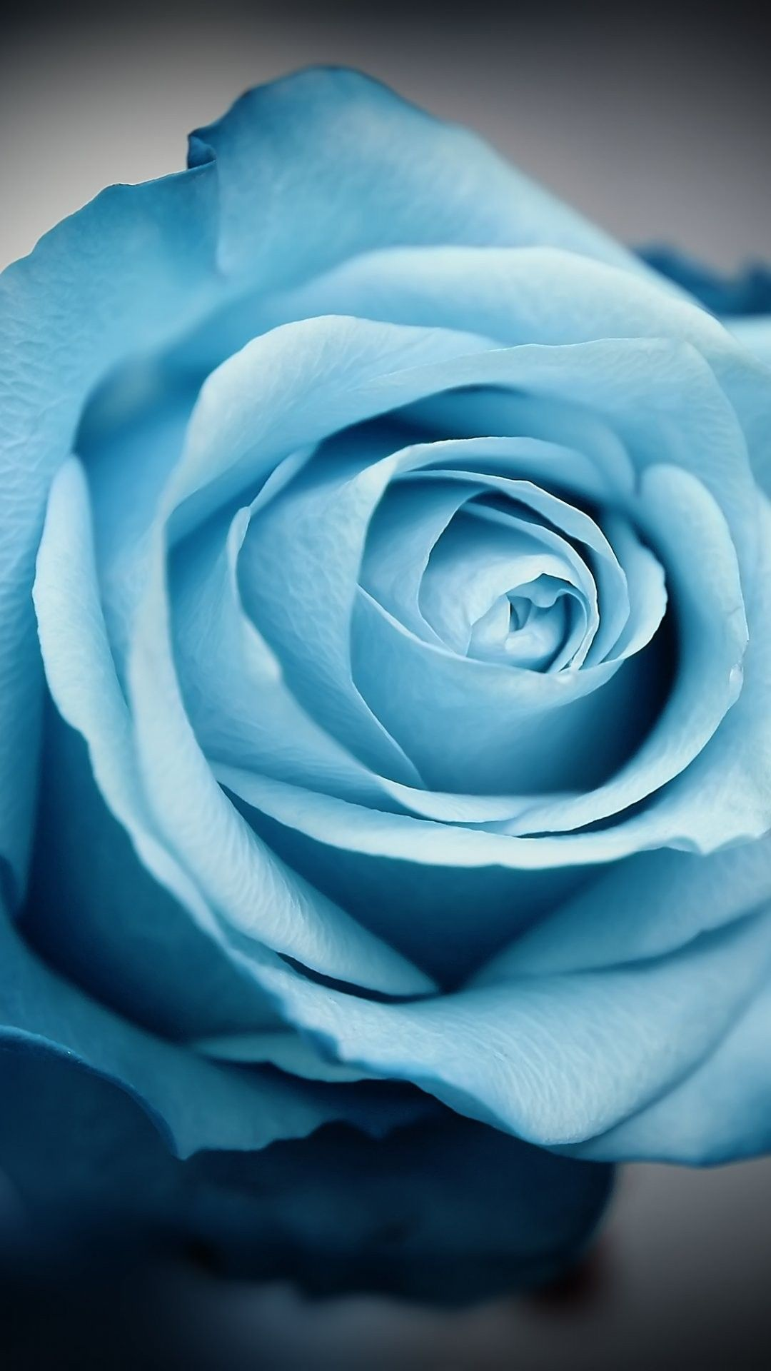 iPhone wallpapers blue flowers Flower Flowers Wallpaper