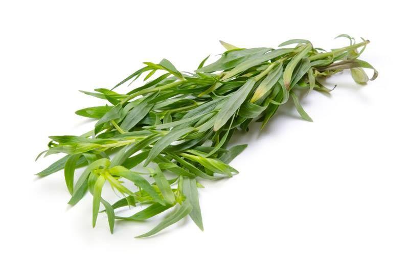 Tarragon Artemisia Dracunculus Essential Oil Herbs Cooking Ingredients Tarragon