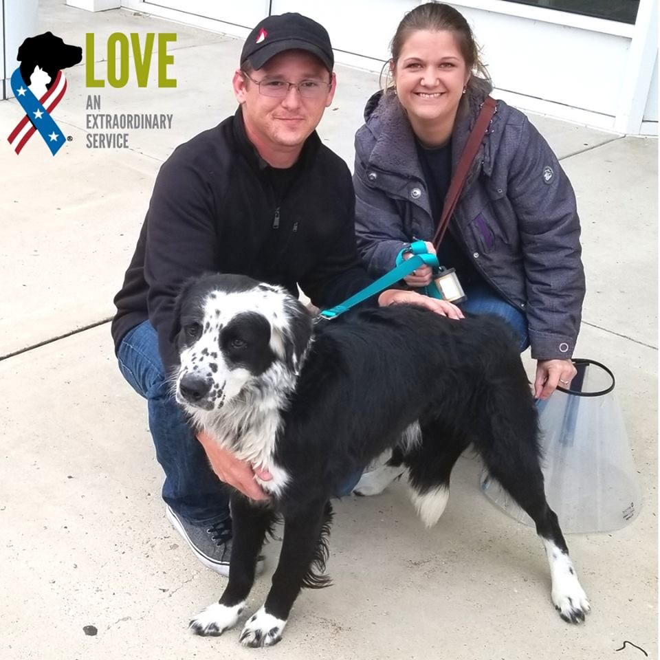 Dobbie A Border Collie Mix Just Adopted Kyle Afghanistan