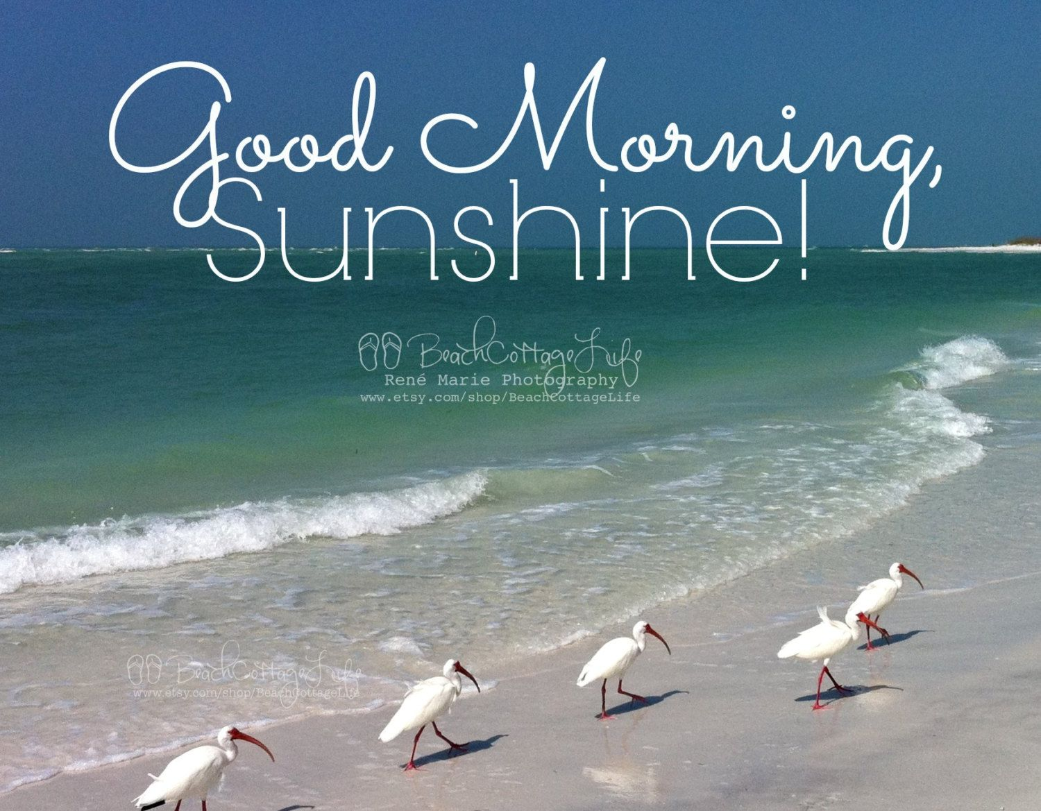 Good Morning Quotes Beach : Seaside morning mages google search beaches oceans