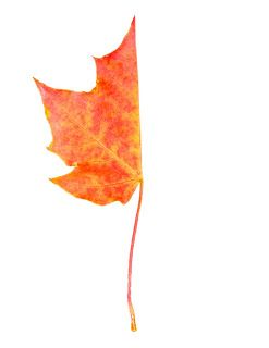 Art Projects for Kids: Finish the Leaf Template