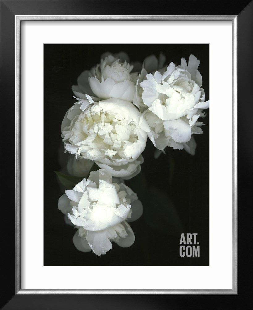 White Peonies Photographic Print by Anna Miller at Art.com