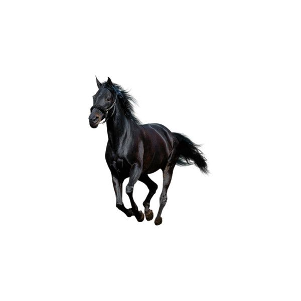 38 Png Liked On Polyvore Featuring Animals Horses Backgrounds Art And Fillers Horses Black Horse Animals