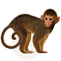 Monkey Png Png Png Images Monkey