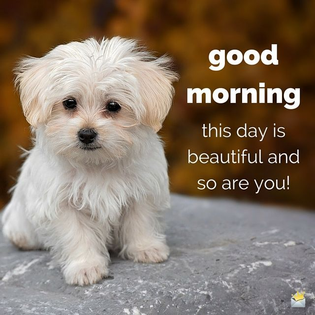 This is a beautiful Day & so are you! cute positive dog