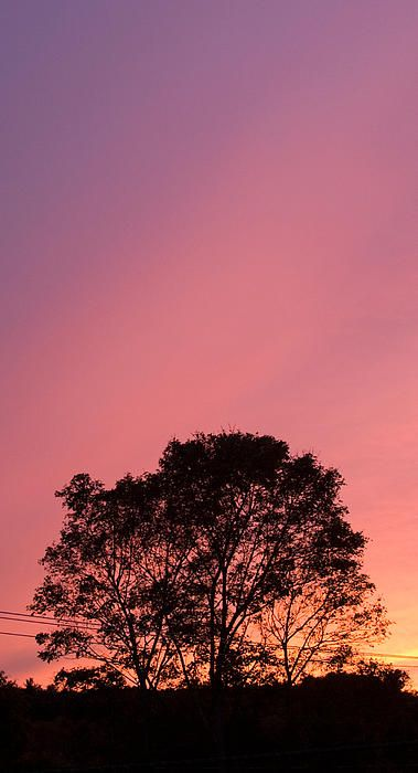 ✮ Sunset In Pink And Purple