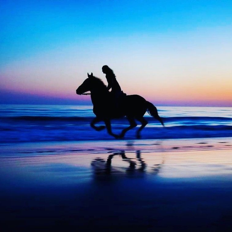 I Need A Pic Like This With My Horse Fond Ecran Cheval Photos De Chevaux Photographie Equestre