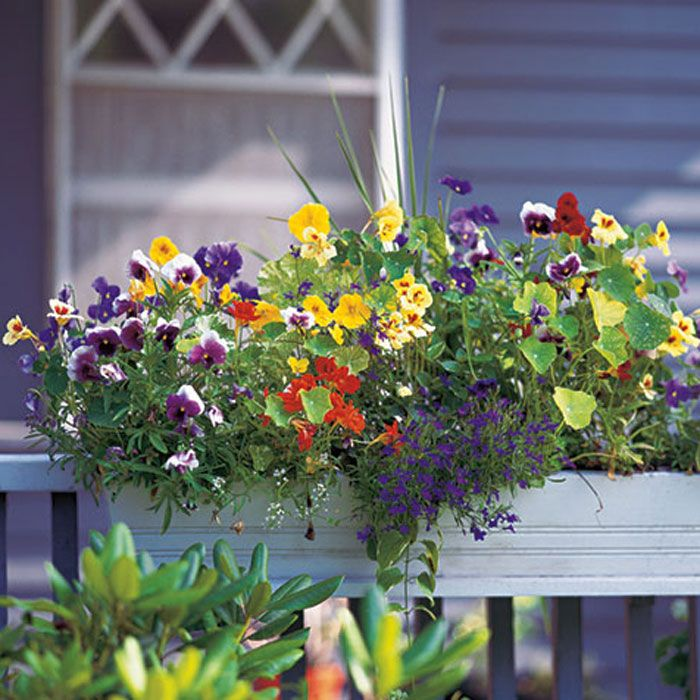 5 Ways To Decorate Your Deck With Plants Window Box Flowers Flower Boxes Window Boxes