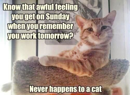 Sunday Night Blues Funny Cat Pictures Funny Animal Pictures Funny Cat Photos
