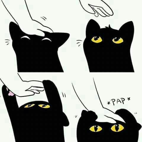 Attention Seeker • Cat • Cute • LOL