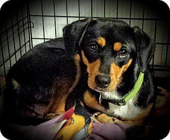 Pin By Michaela Cline On Dogs Beagle Beagle Mix Pets