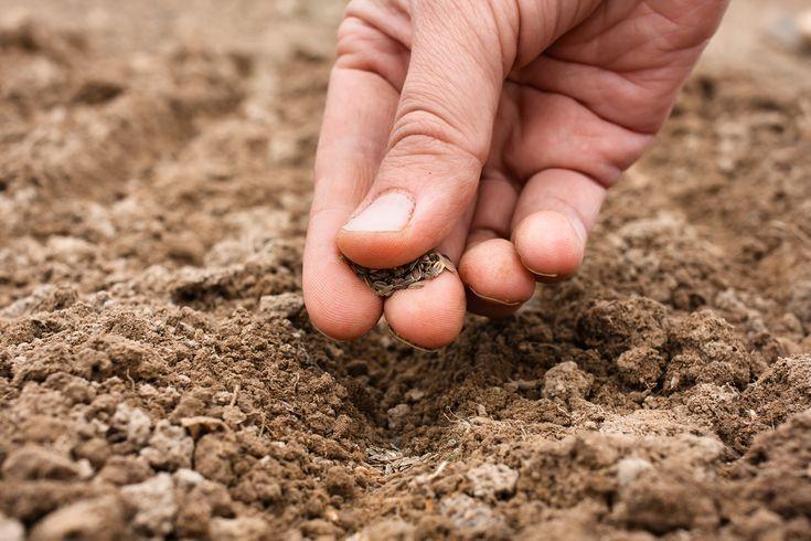 Gardening: it depends on the soil #gemüsegartenanlegen