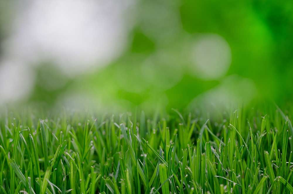 Give Your Home A Better Lawn This Spring