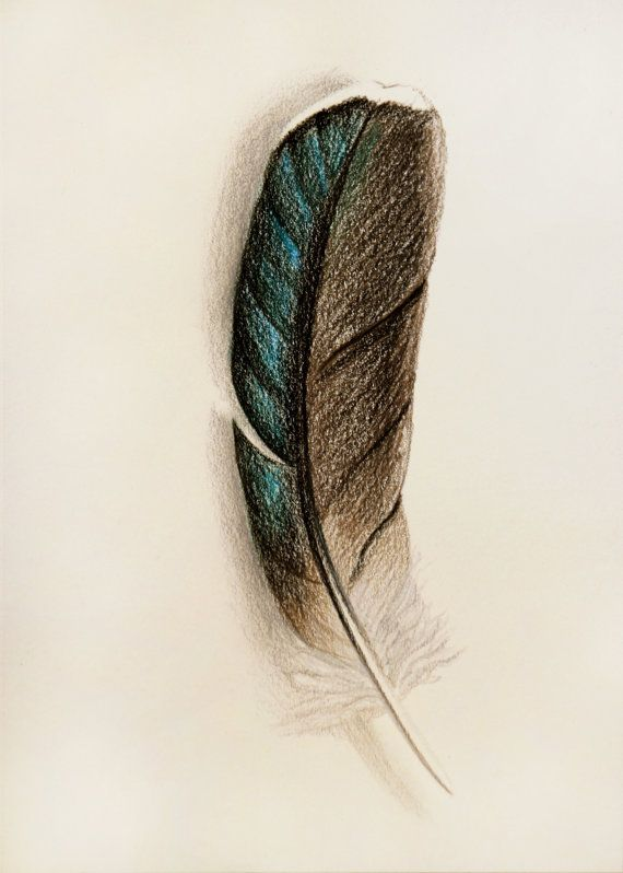 Bird Feather Drawing  Pencil Drawing Print 5x7 by KEBookmanFineArt, $15.00