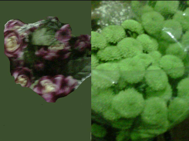 Con estas flores se puede hacer cualquier cosa desde un ramo de novia, hasta un bonito centro de mesa.