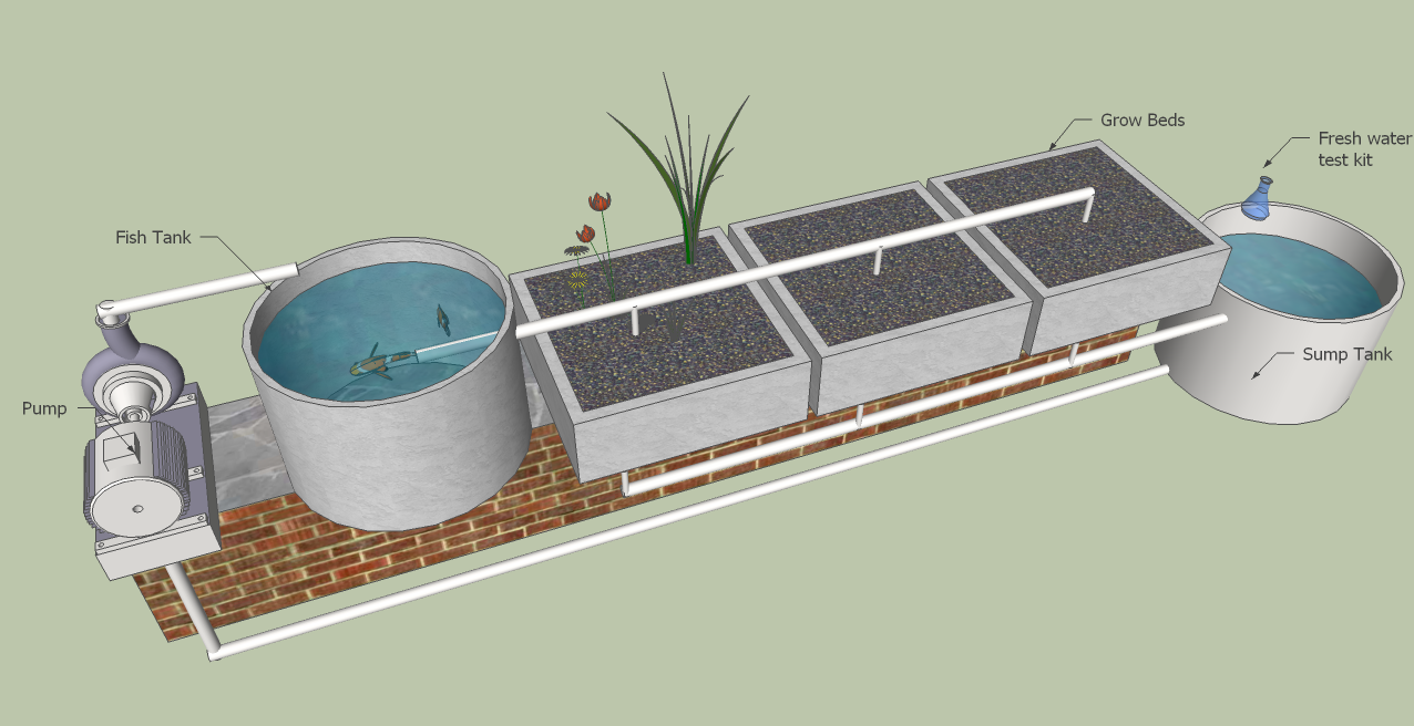 aquaponics aquaponics setup is done backyard