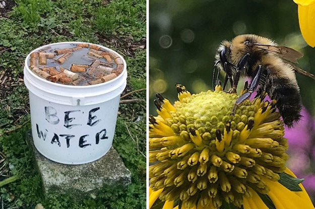 8 Practical Things You Can Do To Help Save The Bees   Save ...