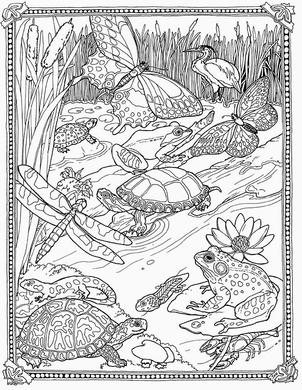 Mossy Wetland Coloring Sheet Adult Coloring Pages Coloring