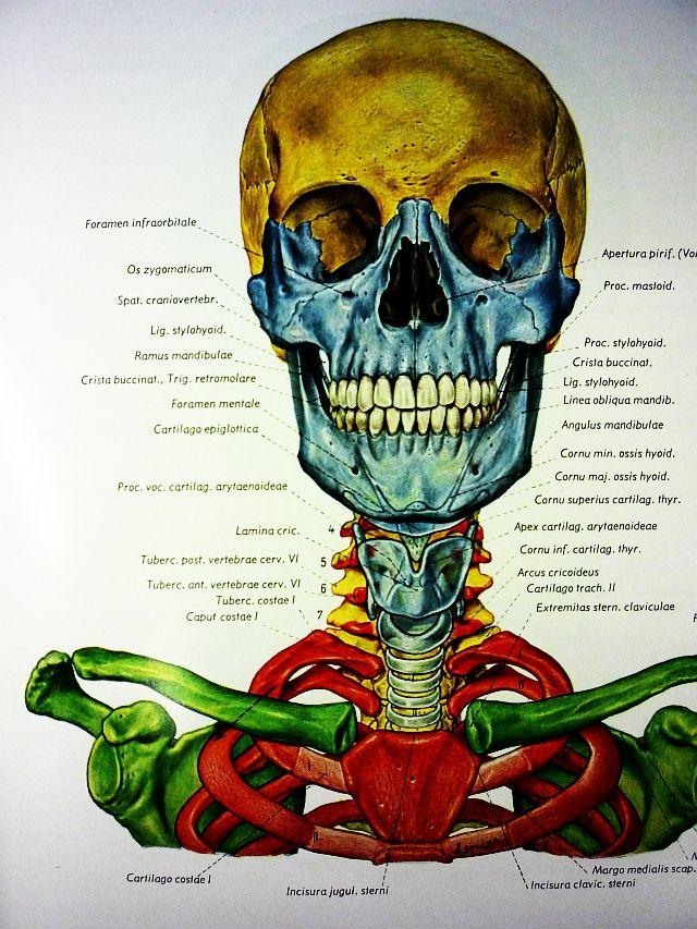 Topographische Anatomie des Menschen\'Volume One: Head & Neck\'Eduard ...