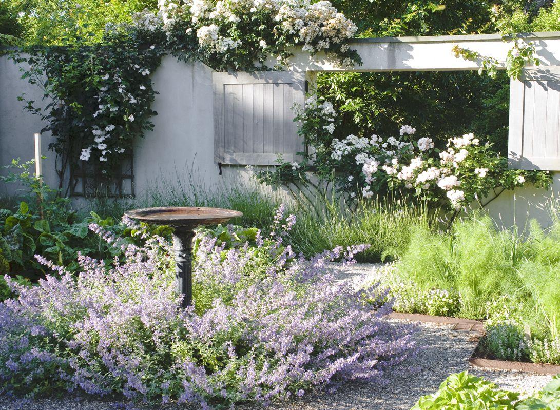 Ina 39 s nepeta one of her favorite plants in the garden for Pflanzengestaltung garten