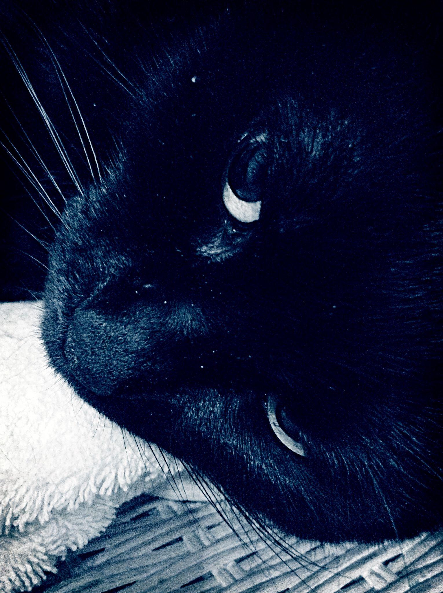#leiathecutiecat #blackcatcutiecat #cutiecat13