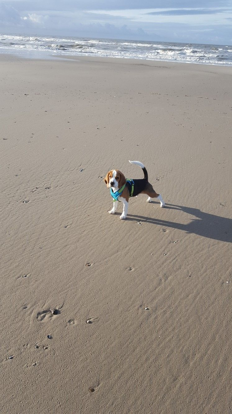 Best Sea Beagle Adorable Dog - cde23ea3683f79ab717c79b456ff4523  Picture_124128  .jpg