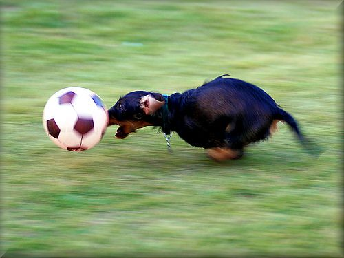 Professional soccer dox