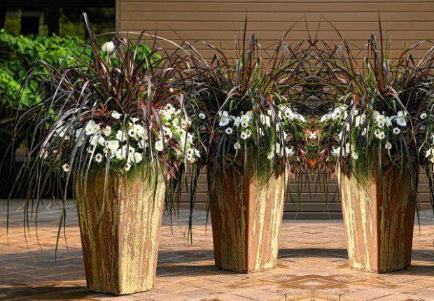 Inne Trawy Do Donic Fall Container Gardens Plants Garden Containers