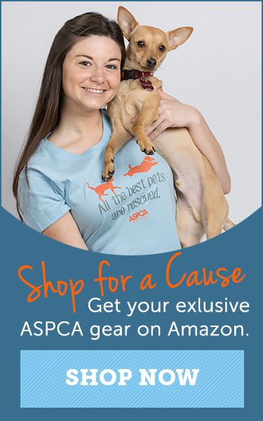 Adoptable Dogs Dog Adoption Aspca Animal Shelter Volunteer