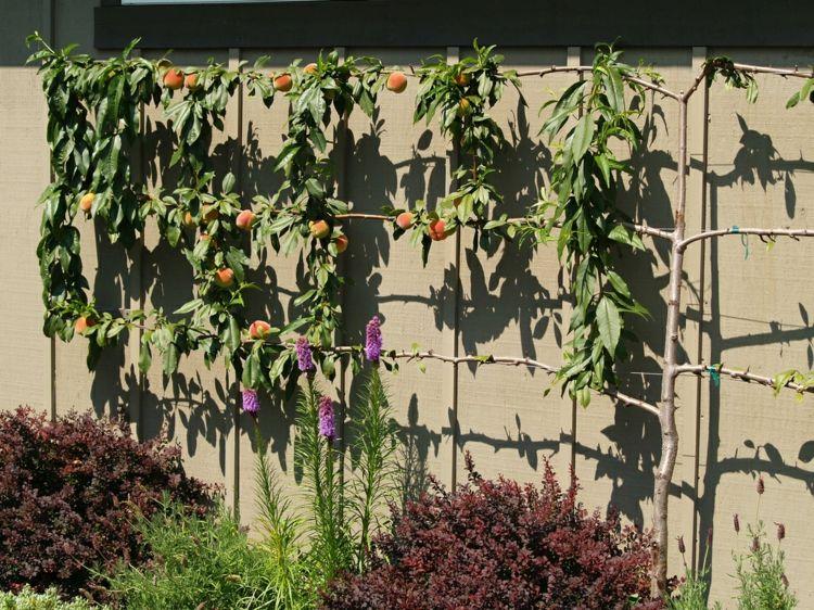 Spalierobst Garten Wandgestaltung Pfirsich Holz Rankgitter