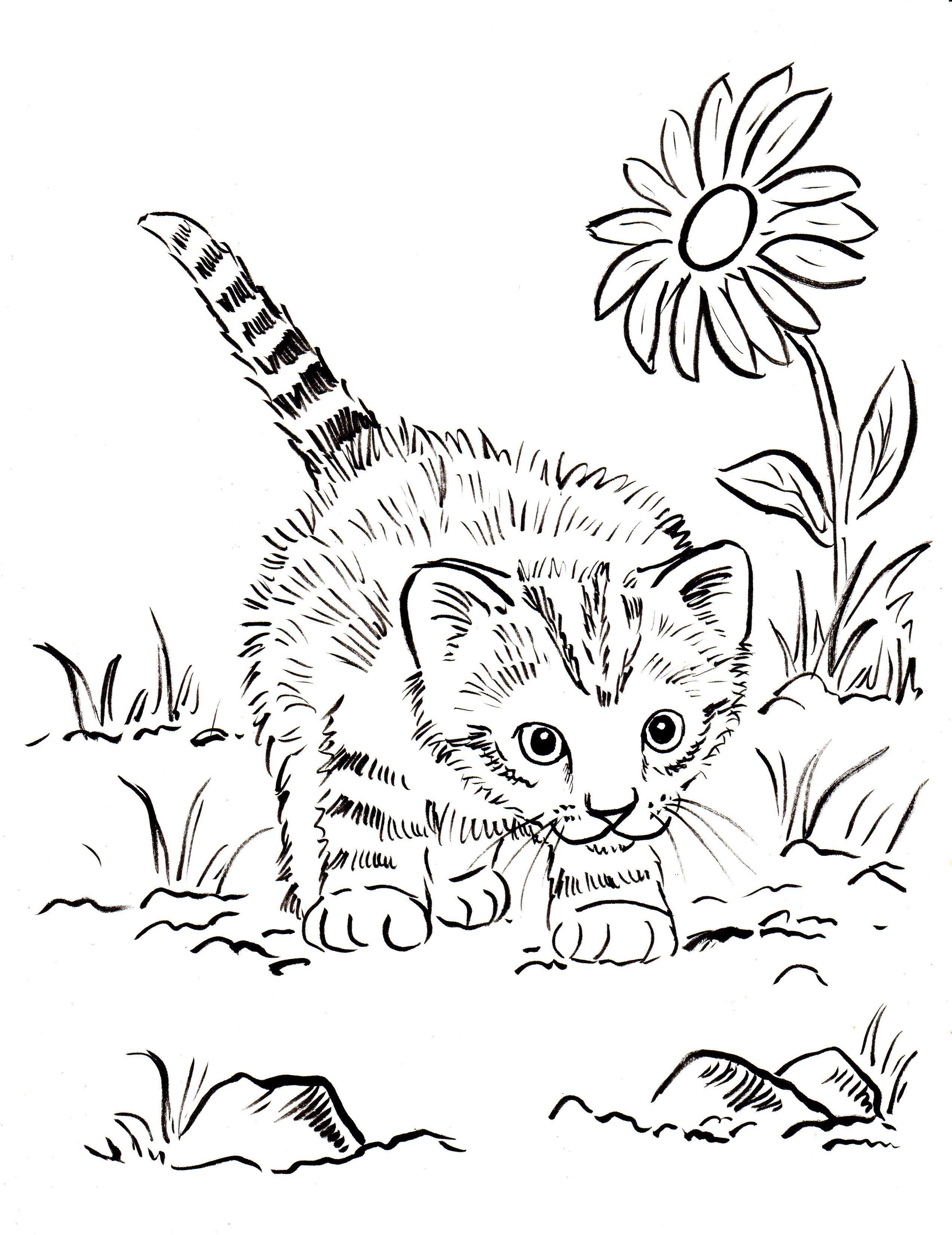 All You Have Ever Wanted To Know About Dogs Cat Coloring Book Kittens Coloring Puppy Coloring Pages