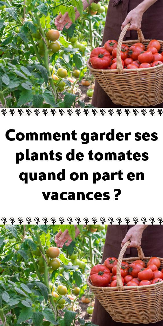 Epingle Par Manyne A 360 Sur Jardin Au Naturel Planter Tomates