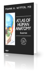 Netter Atlas Of Human Anatomy 6th Edition Pdf Download Anatomy