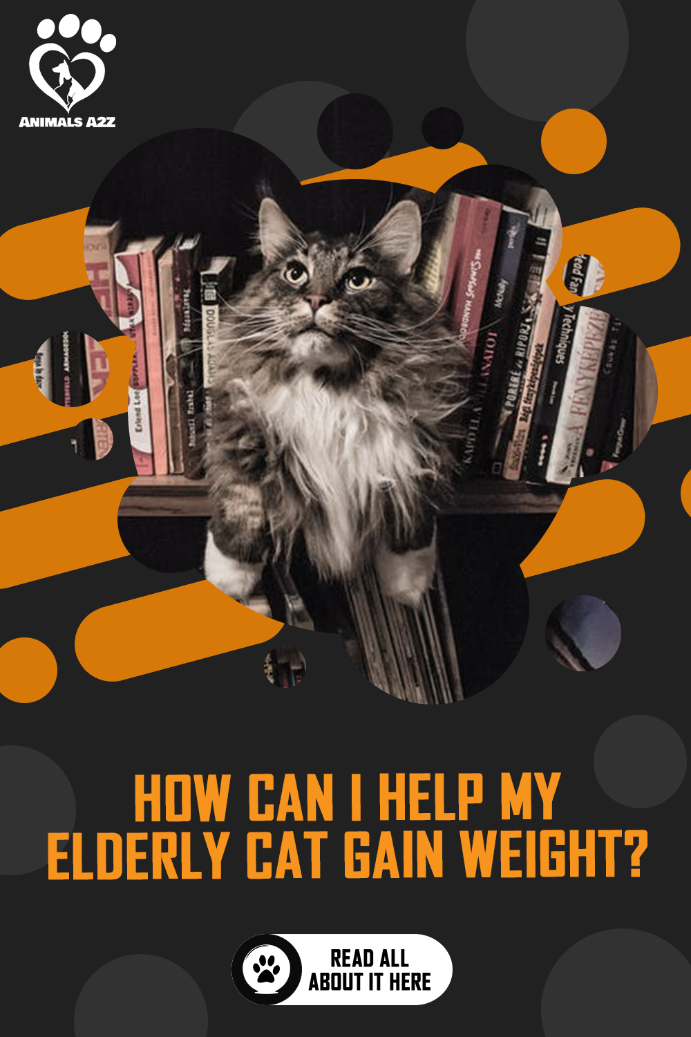 How Can I Help My Elderly Cat Gain Weight Detailed Answer In 2020 Cat Facts Cat Questions Best Cat Food