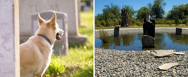 Creative Fundraising For Dog Parks Dog Park Indoor Dog Park Dogs