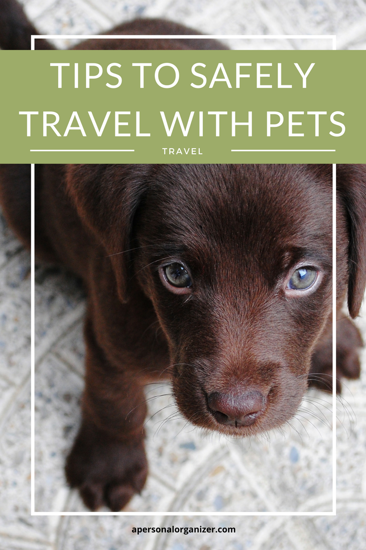 Tips To Travel With Pets Pet Travel Dog Friendly Hotels Pet Friendly Stores