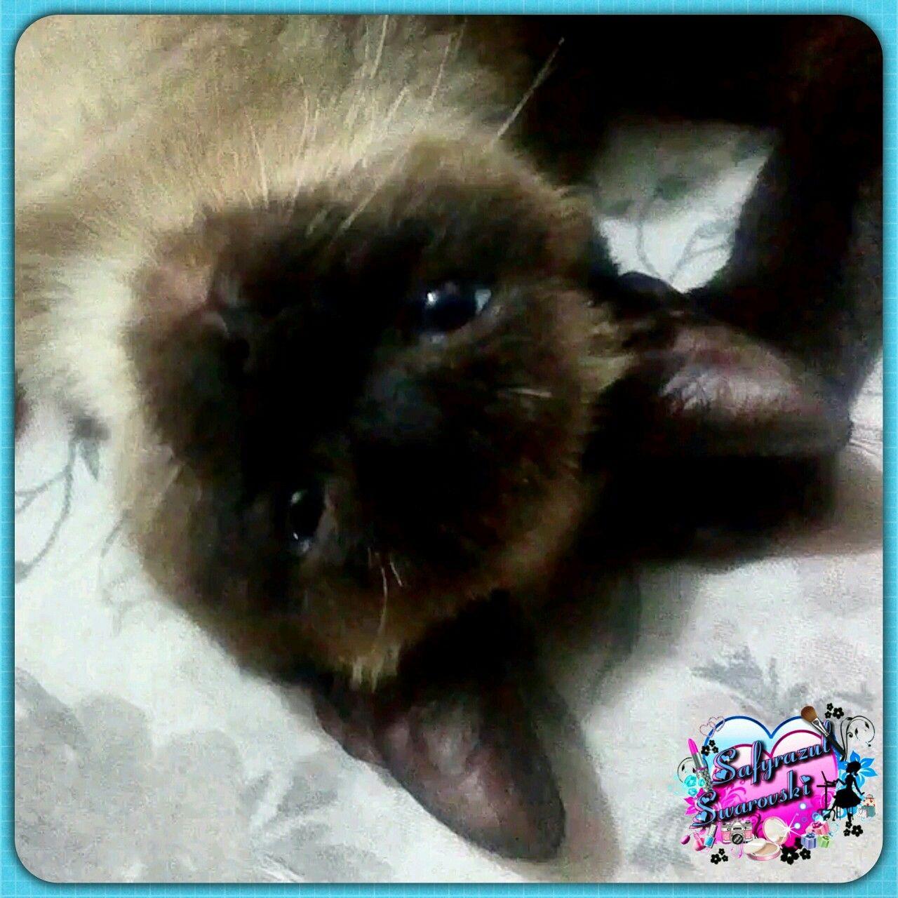 Olha a carinha do Smayk #gatodormindo #gato #gatos #filhote #felino #cats #cat #mundobicho #mundopet #pets #pet #bixanos