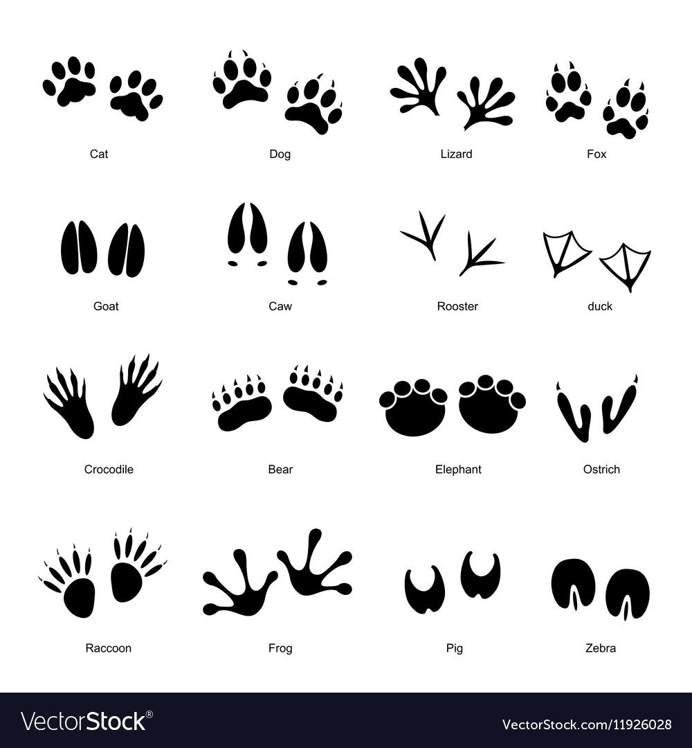 Black Different Animal And Bird Silhouettes Tracks Set With Name Vector Illustration Download A Free Preview Or H Animal Tracks Bird Silhouette Black Animals [ 1080 x 1000 Pixel ]