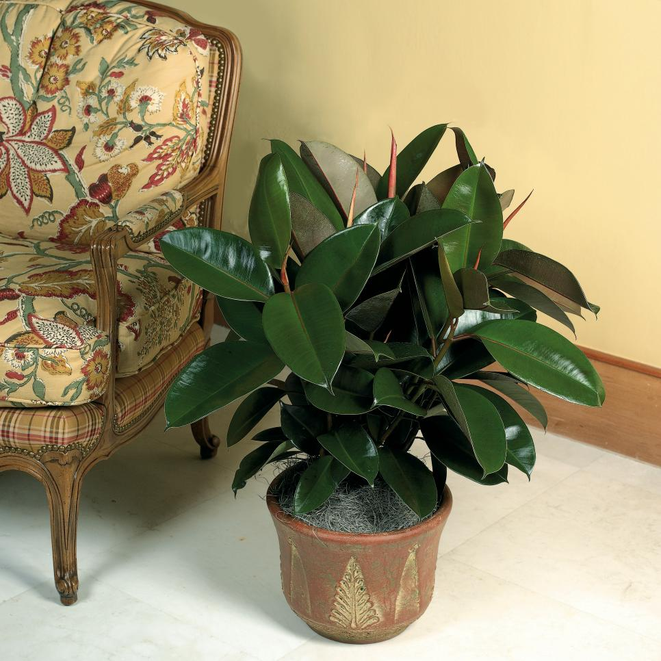 Top 20 Plants for Cleaning Indoor Air HGTV in 2020