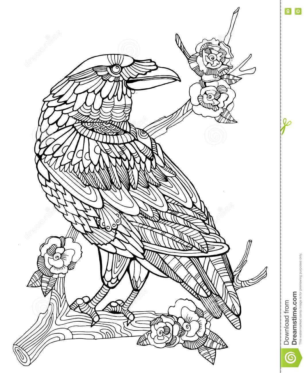 Libro De Colorear Del Pájaro Del Cuervo Para El Vector De Los ...