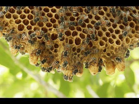 cde91678e936ed63c8eae9ceeae9ae8d - How To Get Rid Of Small Hive Beetle Larvae