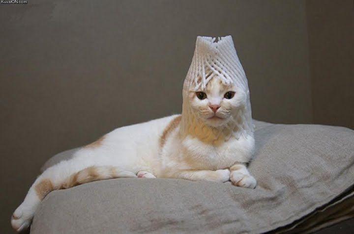 犬や猫に果物ネットを被せるのが流行ってるぽい 画像 A Attrip 猫 子猫 猫大好き おもしろ猫画像