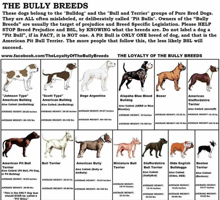 Pin By Tiffany Woodworth On Dog Is My Copilot Bully Breeds Dogs Bully Dog