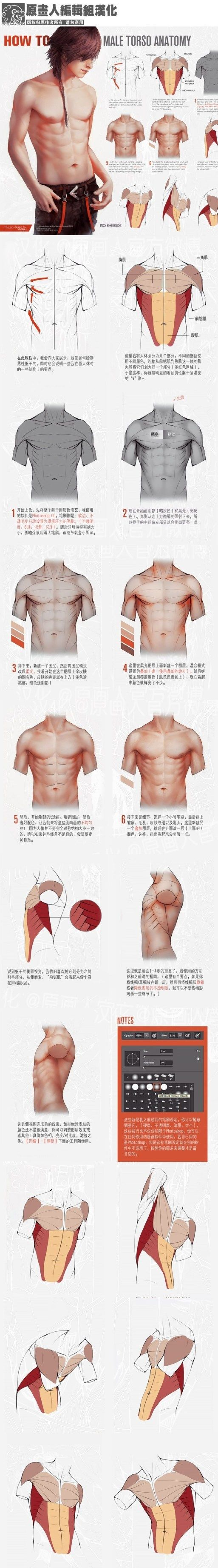 Torso anatomy tutorial | Medical Terminology | Pinterest | Zeichnen ...