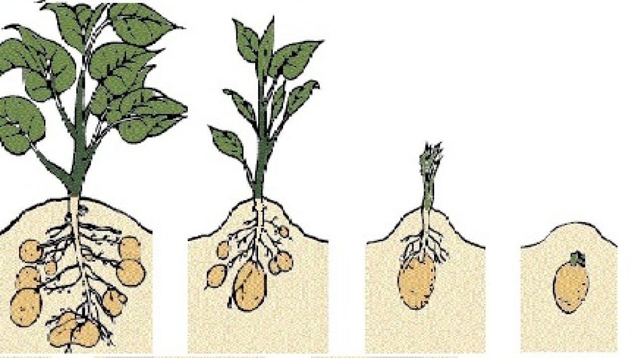 مراحل نمو البذرة Seeds