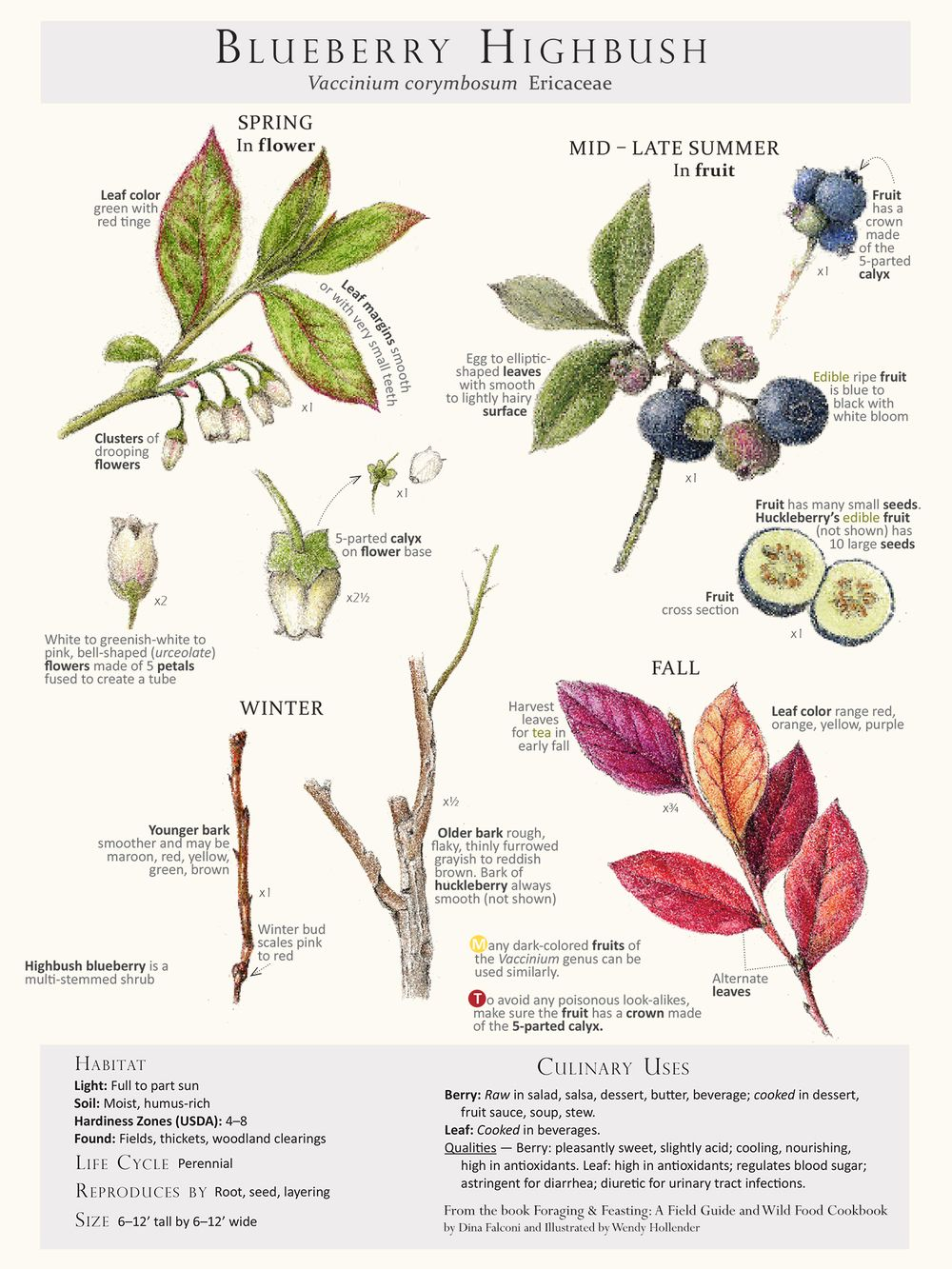 Foraging & Feasting Limited Edition Print - Blueberry