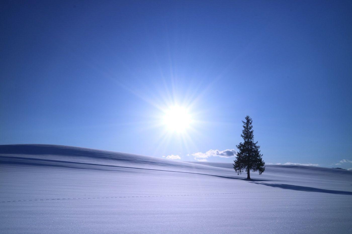 【北海道の絶景】北海道美瑛町にある「クリスマスツリーの木」をご紹介!/aumo【アウモ】