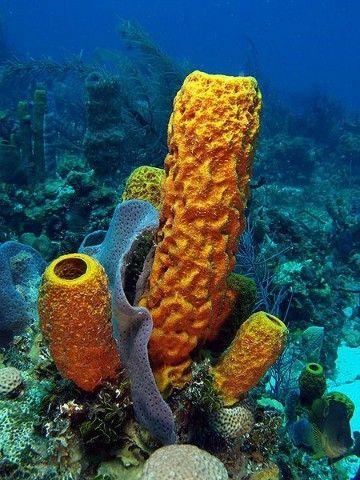 Imagenes De Esponjas De Mar Dibujos Esponja De Mar Criaturas Del Oceano Corales De Mar